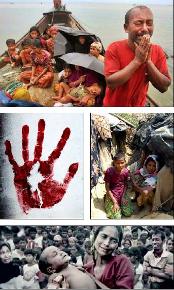 The Outcry of Rohingya!